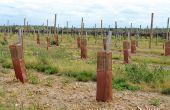 Les autorisations de plantation  nouvelle en 2017. Photo : S. Favre/Pixel Image