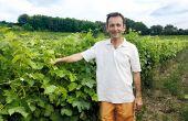 Olivier Brès est persuadé que le soin des plantes par les plantes est une solution d'avenir, pour tous les vignerons. © S. Favre/Pixel Image