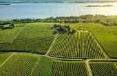 La pérennité des caves coopératives passe, en partie, par le volume. Pour aider les adhérents à s'agrandir ou pour attirer de nouveaux viticulteurs, des coops s'impliquent dans les questions foncières.