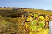 Le vignoble est situé dans la partie méridionale de la Corrèze,  sur des collines de schistes, orientées sud-ouest.