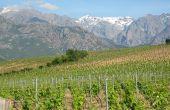 Le domaine de 20ha, situé à côté de Calenzana dans le nord de la Corse, produit en AOP Calvi. Photo : Domaine A Ronca