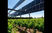 Privilégier les besoins de la culture plutôt que la production photovoltaïque: tel est le concept de l'agrivoltaïsme. Photo : Sun'R