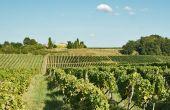 En viticulture, deux leviers permettent de stocker du carbone: l'enherbement,  mais aussi l'apport d'amendements organiques.