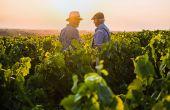 Crise du Coronavirus : comment aider les vignerons français ? © Jackfrog/Adobe Stock