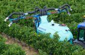 En viticulture, 8 traitements phyto sur 10 sont des fongicides