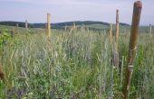 choisir et réussir ses couverts végétaux et engrais verts en viticulture