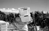 Les vendanges 2020 de la bodega Piedra Negra se sont déroulées, courant mars, en pleine épidémie de Covid-19