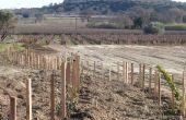 Double haie plantée en 2015 par Charles Duby, vigneron en IGP Côte de Thongue. DR