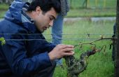 Thomas Chassaing, conseiller viticulture à l'ATV, a évoqué les étapes à suivre dans les parcelles gelées. Photos : O.Lévêque/Pixel Image