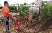 Formation: Une approche sensible du cheval au service de l'agriculture