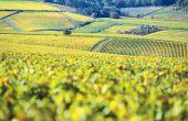 Le vignoble bourguignon connaît une hausse des prix du foncier de 6,7% en 2015, la plus forte hausse parmi les vignobles AOP, dont la croissance moyenne est de 3%. Photo : Aterrom/Fotolia