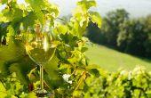 Les discussions autour des vins naturels sont ouvertes au sein de l'INAO.  Photo : philipimage/Fotolia