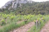 vigne et biodiversité