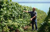 Jean Denis Perrochet est vigneron-récoltant en Suisse près de Neuchâtel
