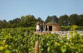 «Chaque gérant d'un domaine viticole doit comprendre que l'œnotourisme est un axe central pour accueillir  et fidéliser sa clientèle», souligne Estelle de Pins, experte bordelaise.  BIVB / Les Créations de l'Etoile / BARILLEC Louise