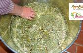 Préparation d'une décoction de prêle. La prêle aide la plante à se défendre contre les maladies cryptogamiques, et peut être utile en cas d'excès d'eau. Photo : Éric Maille/Agrobio Périgord