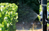pulvérisation vigne