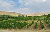 Une des principales spécificités de l'Arménie viticole est qu'elle est essentiellement plantée en cépages endémiques.
