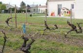 viticulture et voisinage