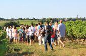 Festibalade en appellation blaye-côtes-de-bordeaux. Photo:  Syndicat des blaye-côtes-de-bordeaux